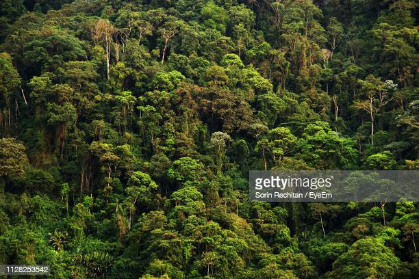 high angle view of trees in forest - 熱帯雨林 ストックフォトと画像