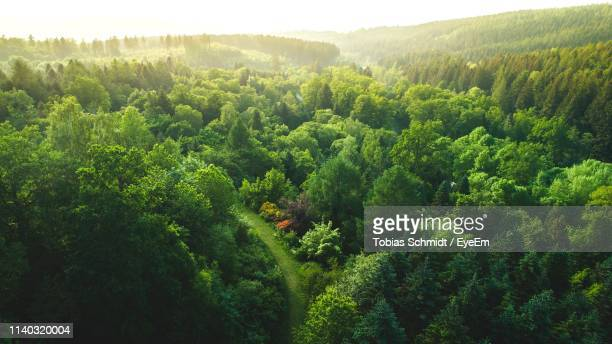 high angle view of trees in forest - wald stock-fotos und bilder