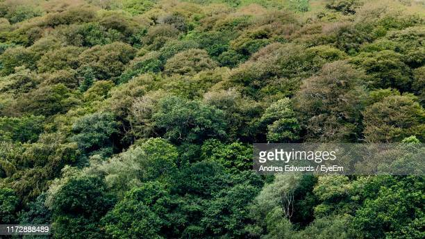 high angle view of trees in forest - treetop stock pictures, royalty-free photos & images