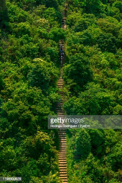 high angle view of trees in forest - lantau stock pictures, royalty-free photos & images
