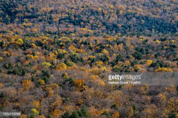 high angle view of trees in forest - ポーキュパイン山脈ウィルダネス州立公園 ストックフォトと画像