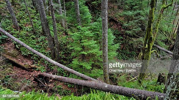 high angle view of trees in forest - neu ストックフォトと画像
