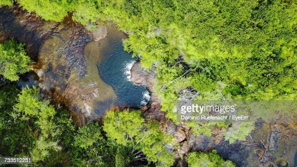 high angle view of trees in forest - great dividing range stock-fotos und bilder