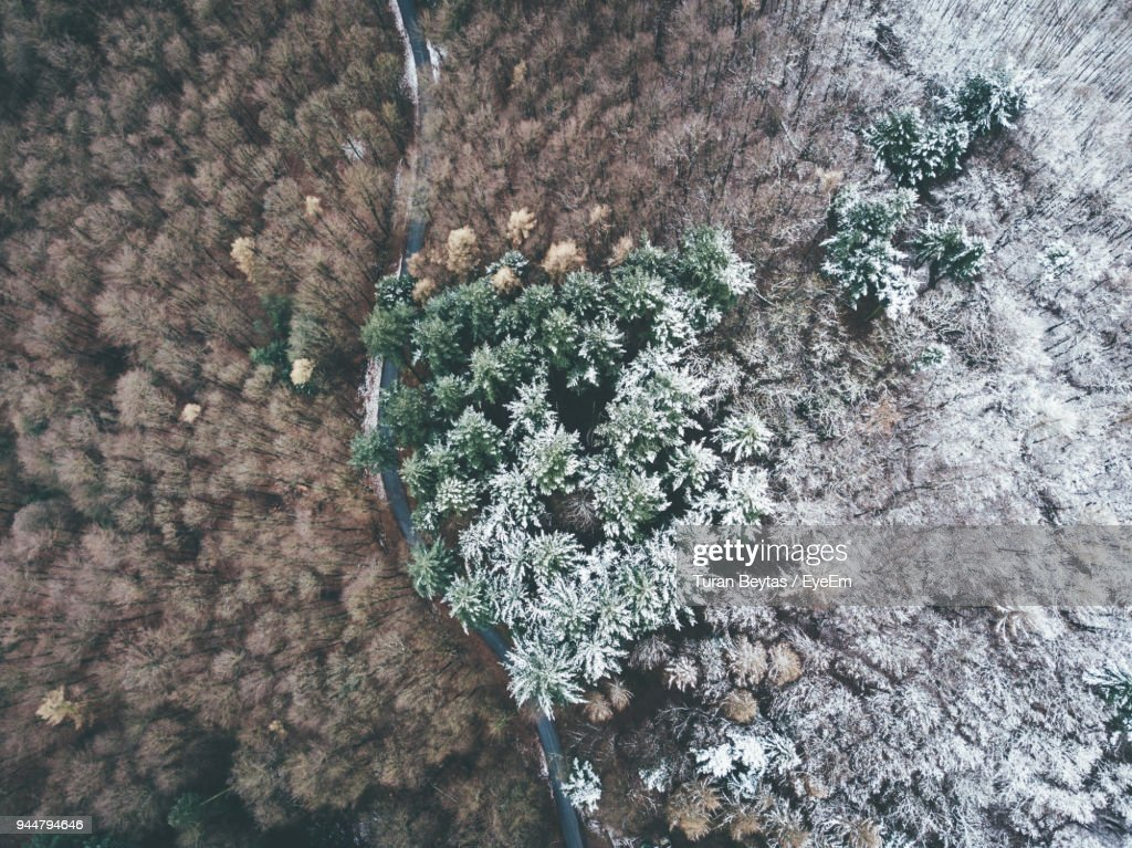 High Angle View Of Trees In Forest : Stock Photo
