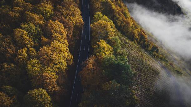 High Angle View Of Trees In Forest, Vineyards And A Road During Autumn At The River Mosel.