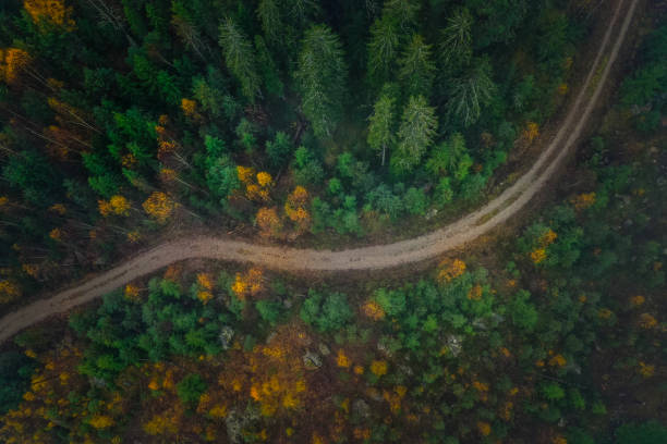 High angle view of trees in forest,Gagnef,Sweden