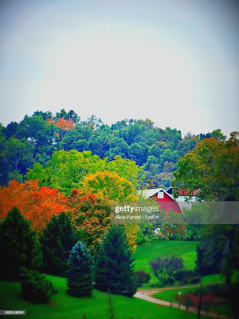 High Angle View Of Trees On Field During Autumn Against Clear Sky : Stock Photo