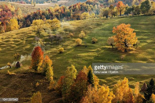 High Angle View Of Trees On Field During Autumn