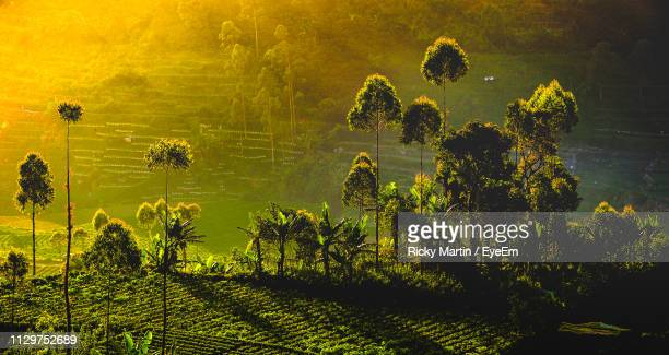high angle view of trees on field - bandung stock pictures, royalty-free photos & images
