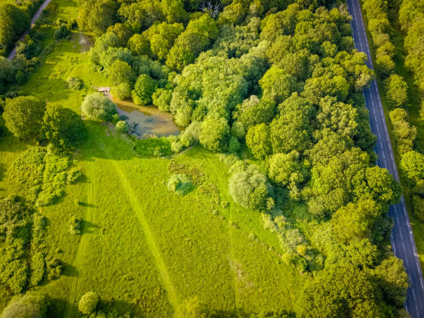 High Angle View Of Trees On Field