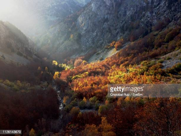 high angle view of trees on mountain during autumn - cristobal ruiz eyeem fotografías e imágenes de stock