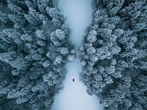 High Angle View Of Trees On Snow Covered Ground - gettyimageskorea