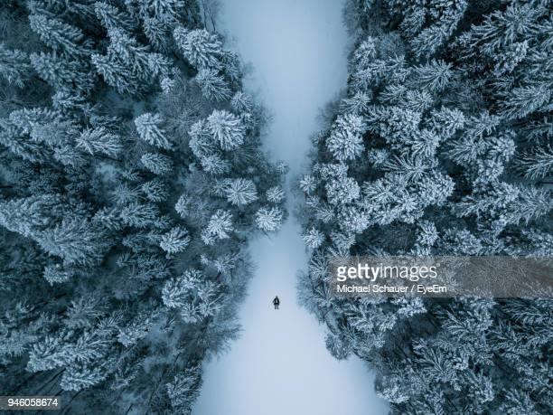 high angle view of trees on snow covered ground - beleza natural imagens e fotografias de stock