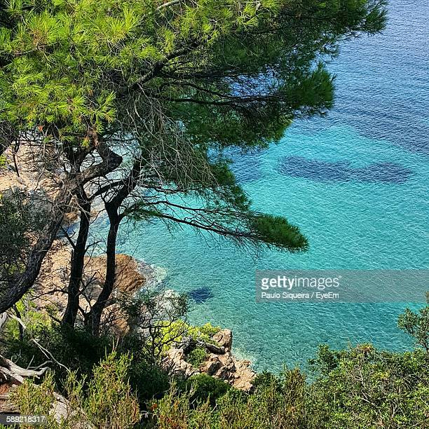 High Angle View Of Trees Over Rocky Shore By Turquoise Sea