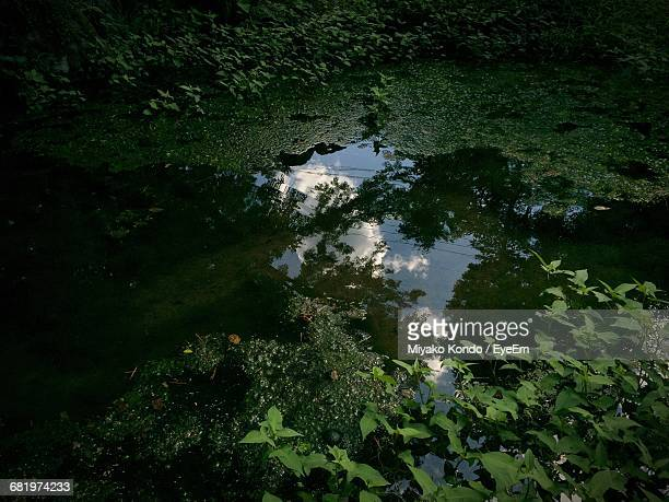 high angle view of trees reflecting in water - 瑞浪市 ストックフォトと画像