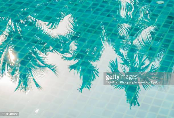 high angle view of trees reflecting on swimming pool - pool stock pictures, royalty-free photos & images