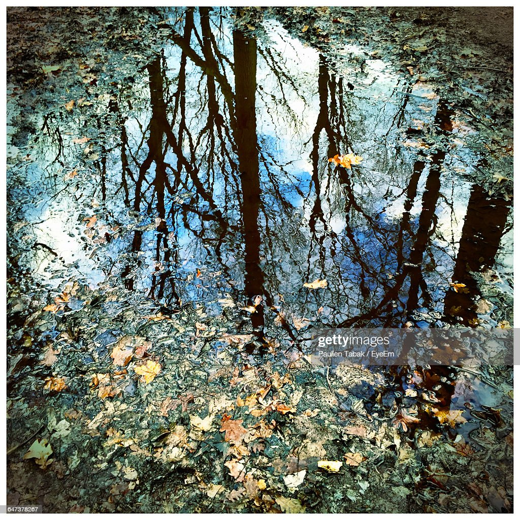High Angle View Of Trees Reflection In Puddle With Fallen Leaves : Stockfoto