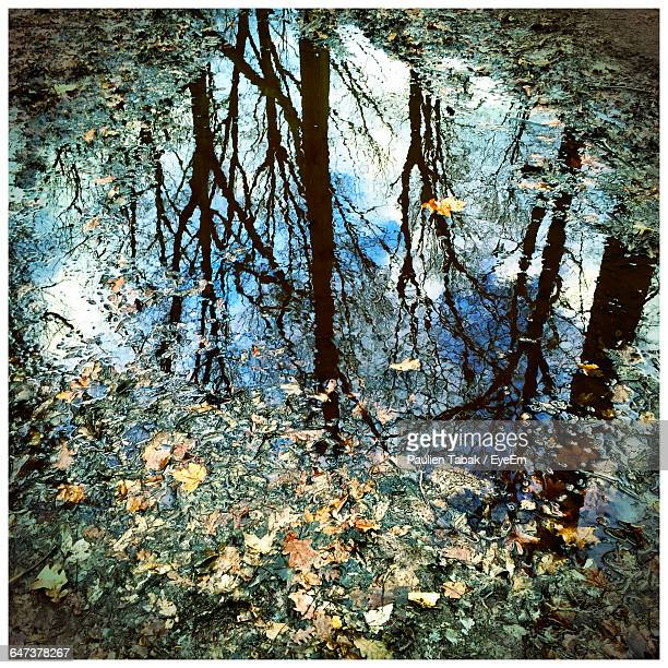 high angle view of trees reflection in puddle with fallen leaves - paulien tabak - fotografias e filmes do acervo