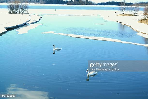 High Angle View Of Two Swans Floating In River