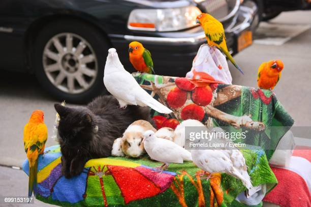 high angle view of various animals on seat in city - tropical bird stock pictures, royalty-free photos & images