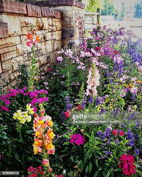 high angle view of various flowering plants growing outside house - gladiolus stock pictures, royalty-free photos & images