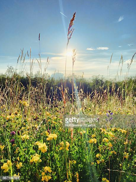 High Angle View Of Various Flowers Blooming In Field Against Sky