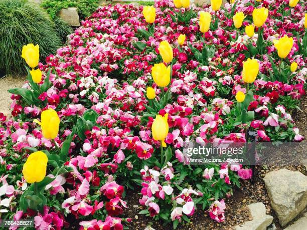 High Angle View Of Various Flowers Blooming Outdoors