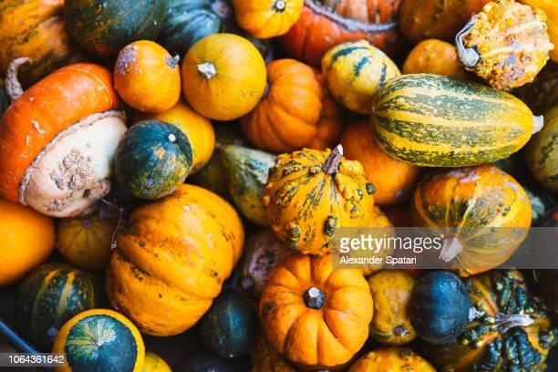 high angle view of various pumpkins - riesenkürbis stock-fotos und bilder