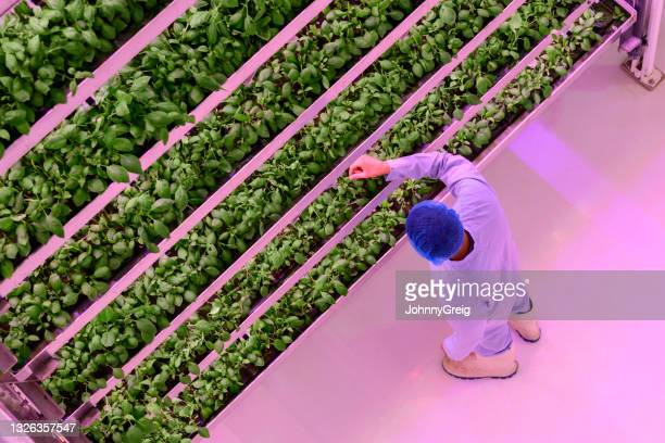 high angle view of vertical farmer checking plant growth - technology stock pictures, royalty-free photos & images