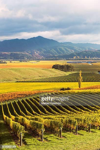 High angle view of vineyards, Marlborough sound