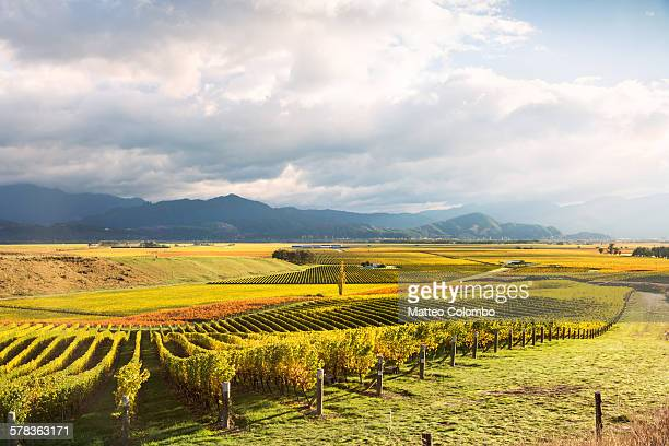 high angle view of vineyards, marlborough sound - marlborough new zealand stock pictures, royalty-free photos & images