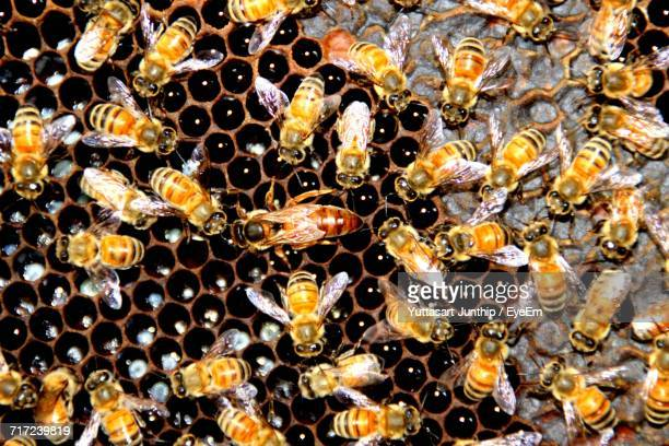High Angle View Of Wasp On Beehive