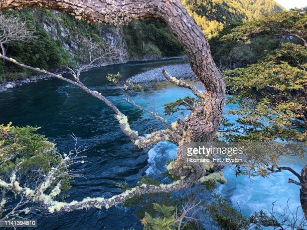high angle view of water flowing through rocks in forest - petrohue river stock photos and pictures