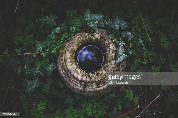 High angle view of water in stone container surrounded by plants
