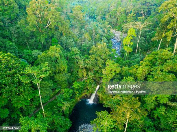 high angle view of waterfall amidst trees in forest - rahmad himawan stock pictures, royalty-free photos & images