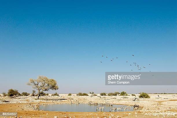High angle view of Waterhole scene. Etosha National Park, Namibia.