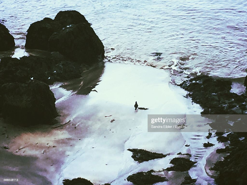 High Angle View Of Wet Shore : Stock Photo