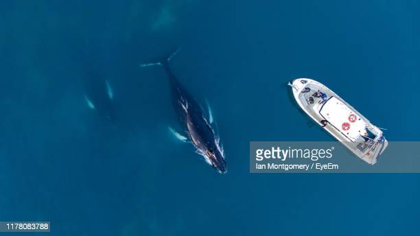 high angle view of whale swimming by boat in sea - wal stock-fotos und bilder
