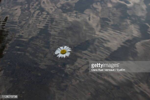 high angle view of white flowering plant - ruel stock pictures, royalty-free photos & images