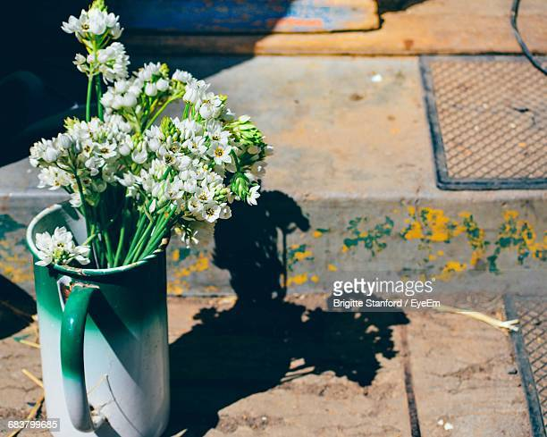 High Angle View Of White Flowers In Jug