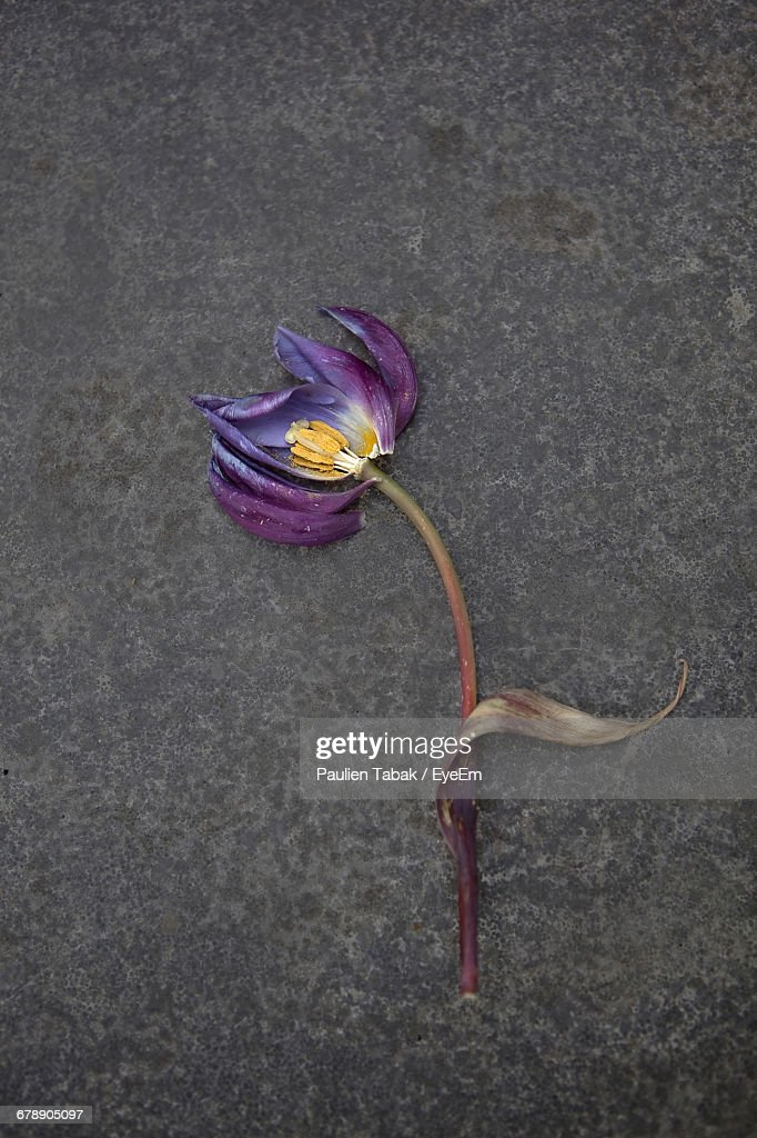 High Angle View Of Wilted Flower On Road : Stock Photo