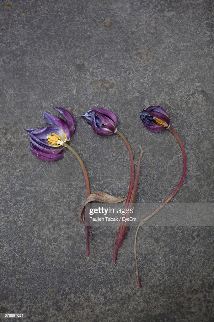 High Angle View Of Wilted Flowers On Road : Stockfoto