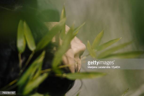 high angle view of woman by plants - marijana stock pictures, royalty-free photos & images