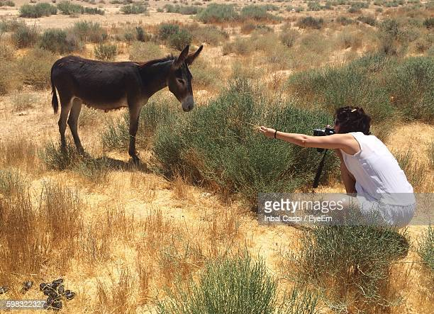 High Angle View Of Woman Photographing Donkey On Field
