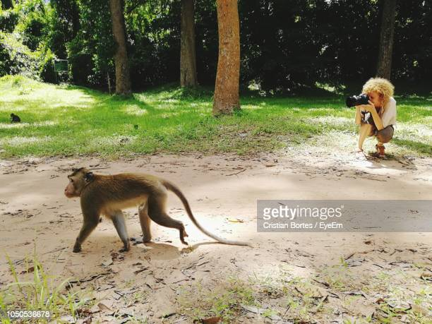 High Angle View Of Woman Photographing Monkey Walking On Field