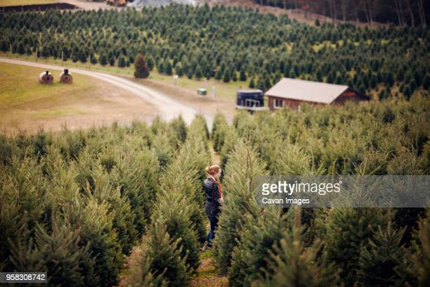 High angle view of woman standing in pine tree farm