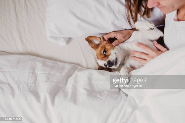 high angle view of woman with dog lying on bed at home - jack russell terrier photos et images de collection