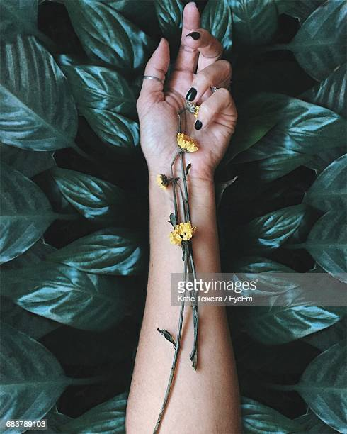 High Angle View Of Womans Arm And Dried Flowers