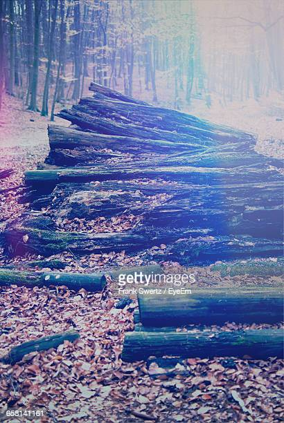 high angle view of wooden logs on field in forest during autumn - frank swertz fotografías e imágenes de stock