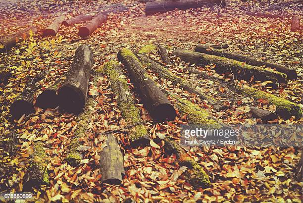 high angle view of wooden logs on field in forest during autumn - frank swertz stock pictures, royalty-free photos & images